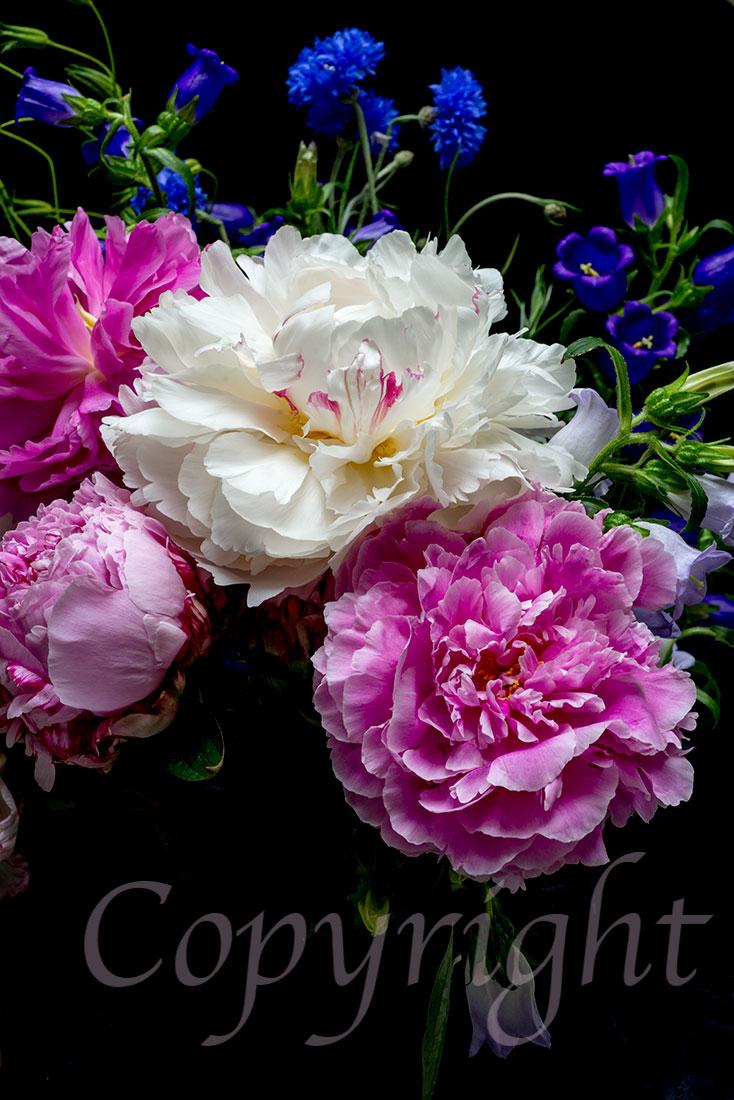 Giclee Flower Print l Anna Killgour-Wilson