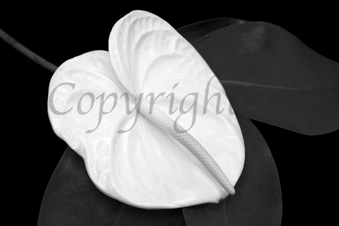 Black & White Art Print l Anna Killgour-Wilson