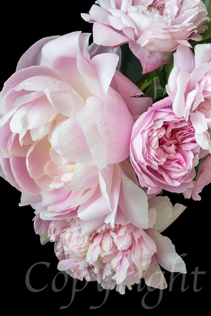 Peonies & Roses Limited Art Print