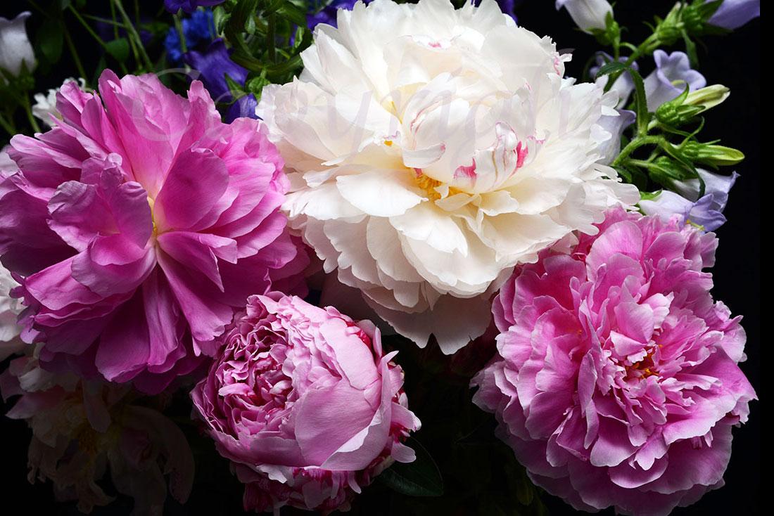 Fine Art Flower Print l Anna Killgour-Wilson