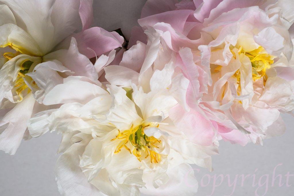 Pastel Peonies Floral Art Print
