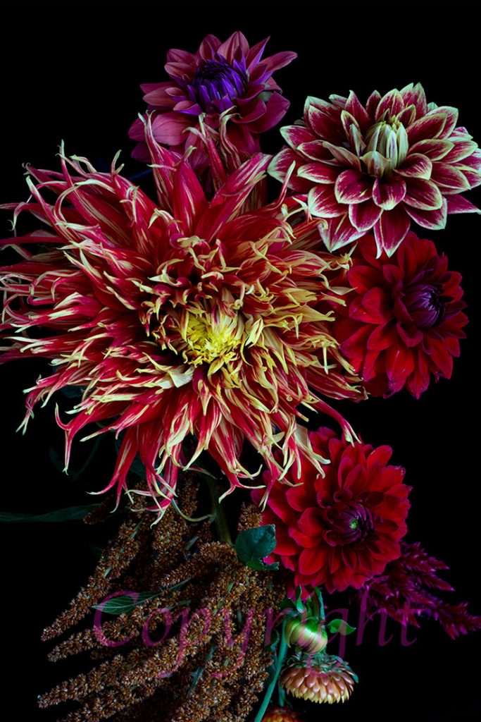 Dahlia Bouquet Limited Edition Print