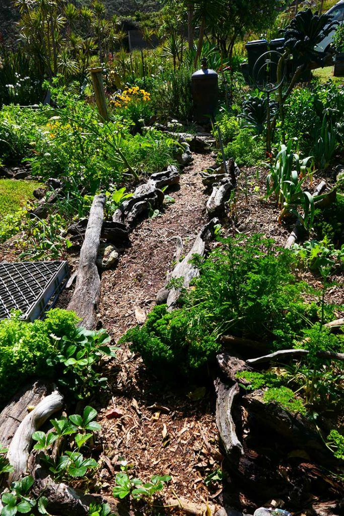 Pathway through vegetable garden